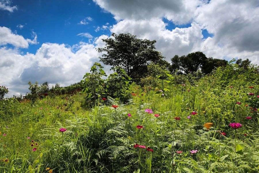 农业休闲园区规划中的四理念
