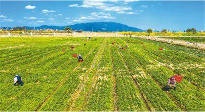 广东增城:打造现代农业产业园和田园综合体
