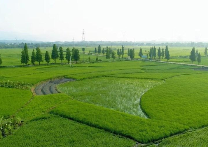 产业兴旺!增城牵手省农业院水稻所打造增城丝苗米产业园