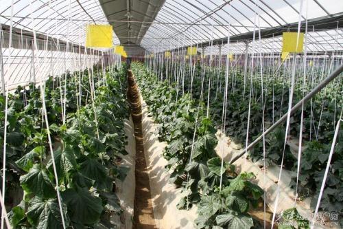 现代农业,会不会成为下一个房地产业?